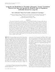 Longevity and Metabolism in Drosophila melanogaster ... - Genetics