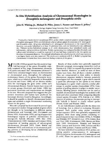 In Situ Hybridization Analysis of Chromosomal ... - Genetics