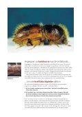 Fångstvirkesfällor mot barkborrar - Holmen - Page 2