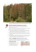 Fångstvirkesfällor mot barkborrar - Holmen - Page 4