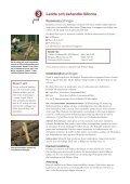 Fångstvirkesfällor mot barkborrar - Holmen - Page 6