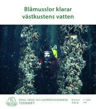 KSLAT nr 4 2005, Blåmusslor klarar västkustens vatten - och ...
