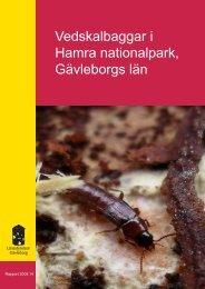 Vedskalbaggar i Hamra nationalpark, Gävleborgs ... - Länsstyrelserna