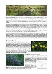 Hävdgynnade växter i Dalarna - exempel på vanliga arter i slåtter ...