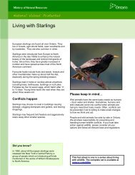 Living with Starlings fact sheet - Ministry of Natural Resources ...