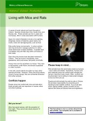 Living with Mice and Rats - Ministry of Natural Resources - Ontario.ca