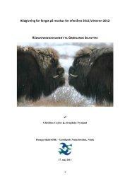 2011-12 Fangstrådgivning for moskusokser - Grønlands Naturinstitut