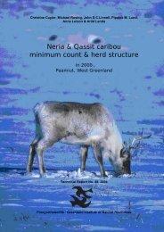 Neria & Qassit caribou minimum count & herd structure