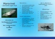 Marsvinet - Danmarks egen hval - Naturstyrelsen