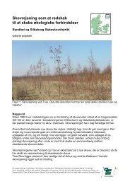 Skovrejsning som et redskab til at skabe økologiske ... - Naturstyrelsen