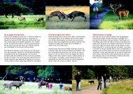 Oplev hjortene i Dyrehaven - Naturstyrelsen