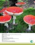 """""""Kanon Natur - svampe"""" som pdf - Danmarks Naturfredningsforening - Page 2"""