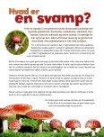 """""""Kanon Natur - svampe"""" som pdf - Danmarks Naturfredningsforening - Page 4"""