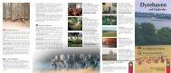 Dyrehaven folder - Naturstyrelsen