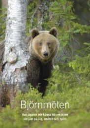Björnmöten – vad jägaren bör känna till om björn ... - Naturvårdsverket