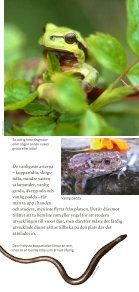 Fridlysta växter och djur i Sverige ISBN: 978-91 ... - Naturvårdsverket - Page 7