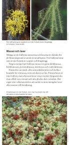Fridlysta växter och djur i Sverige ISBN: 978-91 ... - Naturvårdsverket - Page 5