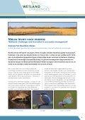Nieuw leven voor moeras - Staatsbosbeheer - Page 3