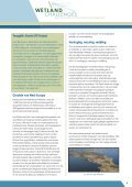 Nieuw leven voor moeras - Staatsbosbeheer - Page 5