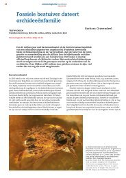 Fossiele bestuiver dateert orchideeënfamilie - Nederlandse ...