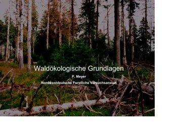 Waldökologische Grundlagen - Nordwestdeutsche Forstliche ...