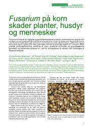 Fusarium på korn skader planter, husdyr og ... - Planteforskning