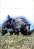 Er zijn specl=aculaire uondsl=en gedaan in oa - Rhino Resource ... - Page 5