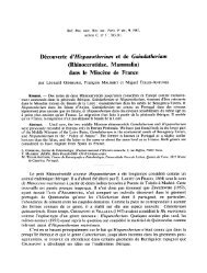 dans le Miocène de France - Rhino Resource Center