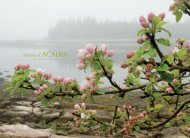 2011 Annual Report - Friends of Acadia