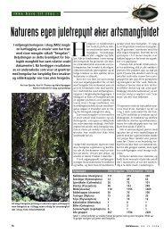 Skogeieren ny - Skog og landskap