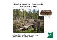 Granbarkborren – innan, under och efter Gudrun - Skog og landskap