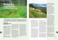 og gjengroing av kulturlandskap - Skog og landskap
