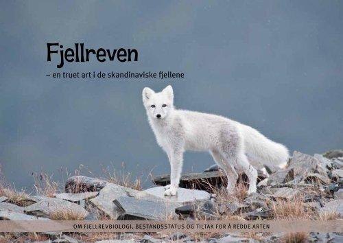 Fjellreven - en truet art i de skandinaviske fjellene (pdf) - NINA