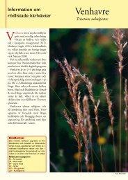 Venhavre (pdf 256 KB) - Svenska Botaniska Föreningen