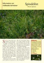 Spindelört (pdf 248 KB) - Svenska Botaniska Föreningen