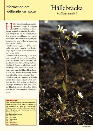 Hällebräcka - Svenska Botaniska Föreningen