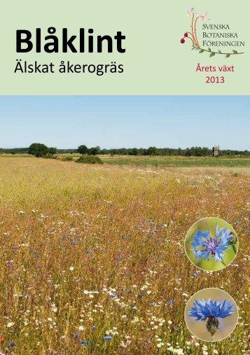 Blåklint - Svenska Botaniska Föreningen