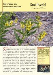 Smällvedel (pdf 32 KB) - Svenska Botaniska Föreningen
