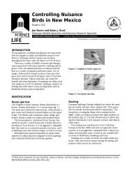 Controlling Nuisance Birds in New Mexico - New Mexico State ...
