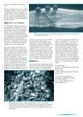 Garnalen - Vlaams Instituut voor de Zee - Page 5