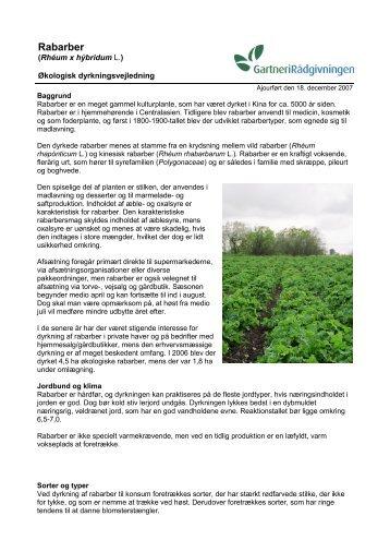 Økologisk dyrkningsvejledning for Rabarber - LandbrugsInfo