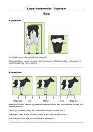 Lineær bedømmelse - Tegninger Krop - LandbrugsInfo