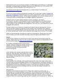 Økologisk dyrkningsvejledning for Hvidkål - LandbrugsInfo - Page 3