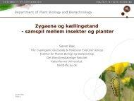 Zygaena og kællingetand - samspil mellem insekter ... - LandbrugsInfo
