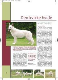 Hvid schweizisk hyrdehund - Hunden