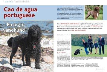 Cao de aqua portuguese - Hunden