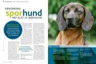 Bayersk bjergschweisshund - Hunden