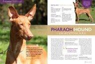 PHARAOH HOuNd - Hunden