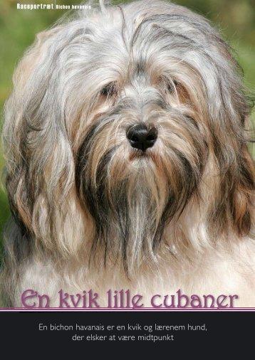 En bichon havanais er en kvik og lærenem hund, der ... - Hunden