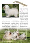 En bichon havanais er en kvik og lærenem hund, der ... - Hunden - Page 2